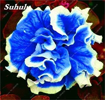 VISTARIC mischen: 100pcs / bag Riesen-Hibiskus Samen Speiseteller Hibiscus Perennial Blume schöne Bonsai-Pflanzen für Haus Garten Bepflanzung