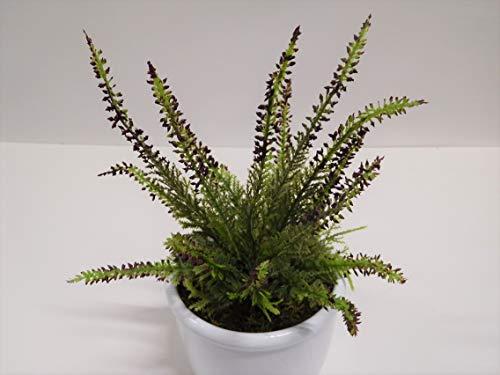 Ziegler Erika Heidekraut Calluna Kunstpflanze H 20 cm rot Bordeaux ungetopft 51023-6 F22