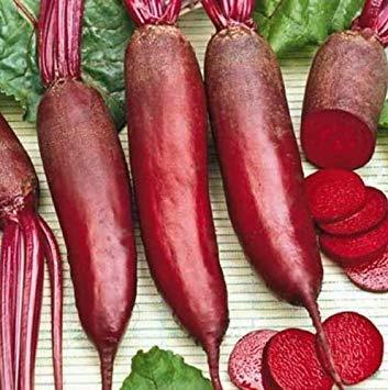 SANHOC Samen-Paket: Frische Heirloom Dunkelrot CYLINDRA Beet -Seeds - Formanova - 60 Tage - Lange Sweet & Tasty