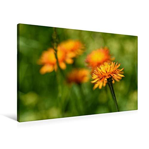 Premium Textil-Leinwand 90 x 60 cm Quer-Format Gold Pippau | Wandbild, HD-Bild auf Keilrahmen, Fertigbild auf hochwertigem Vlies, Leinwanddruck von HerzogPictures