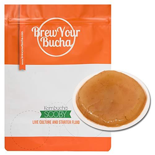 Brew Your Bucha Kobucha SCOBY con Starter Fluid. SCOBY cultivado con azúcar y té de Oro Negro Yunnan (1 SCOBY)