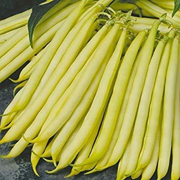 Shop Meeko King Seeds - Bohnen - Dwarf Französisch Bean Orinocco - 125 Samen