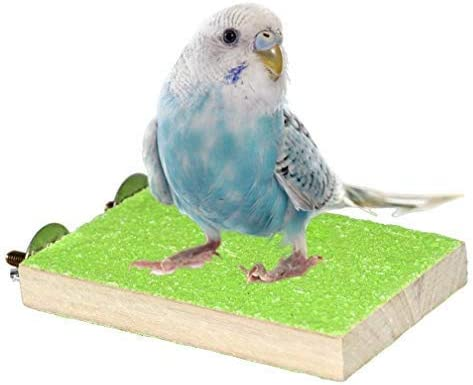 Colorful Bird Perch Stand Platform Natural Wood Playground Paw Grinding Clean for Pet Parrot Budgies Parakeet Cockatiels Conure Lovebirds