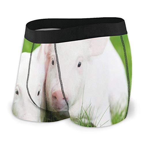 Calzoncillos bóxer para Hombre, Dos lechones de cría en Pasto Verde Cerdo Granja de Animales Granero Agricultura Tamaño XL