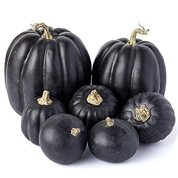 Set of 7 Artificial Black Pumpkins