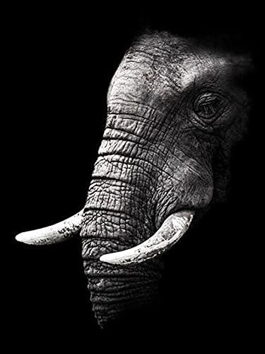 Bordado de diamantes Animal blanco y negro 5D DIY pintura de diamantes elefante completo cuadrado redondo imagen de diamantes de imitación decoración del hogar A11 50x70cm