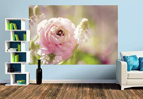 Premium Foto-Tapete Zarte Ranunkel in rosa (versch. Größen) (Size M   279 x 186 cm) Design-Tapete, Wand-Tapete, Wand-Dekoration, Photo-Tapete, Markenqualität von ERFURT