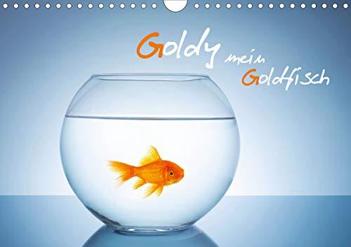 Goldy - mein Goldfisch (Wandkalender 2021 DIN A4 quer)