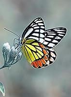 DIY ダイヤモンド塗装キャンバスキット 蝶と花 5Dフルドリルダイヤモンド 大人、子供、初心者向けの手工芸品の装飾アートギフト