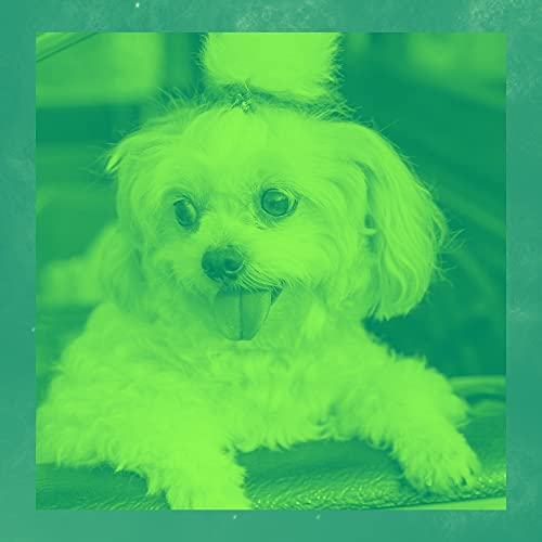 Muziek voor Honden Luxe