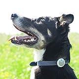 Sure Petcare Animo - Dog Behavior Monitor and Activity Tracker