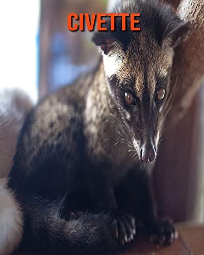 Civette: Photos Etonnantes & Recueil d'Informations Amusantes Concernant les Civette