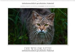 Emotionale Momente Die Wildkatze. Ch