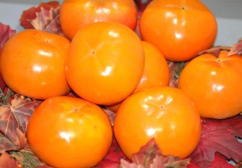 訳あり お買い得品富有柿 ご家庭用わけあり品(規格外品質) 約7.5kg M〜L 30個前後入