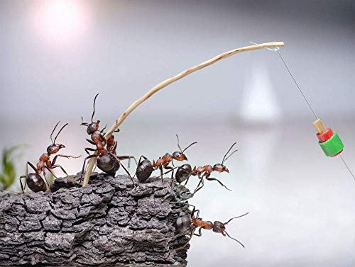 DKISEE Ant Holding Caña de Pesca Clásico Rompecabezas Rompecabezas 1000 Piezas Adultos Niños Mayores Puzzle Festival Regalo Moderno Decoración del Hogar Rompecabezas de Madera 75x50cm