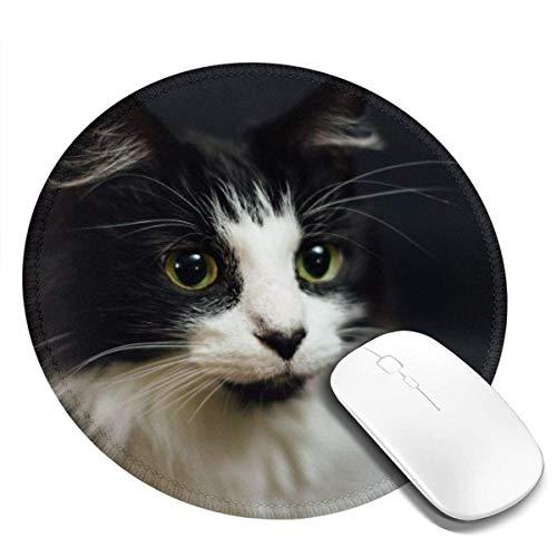 Kleine runde Mauspad 7,9 x 7,9 Zoll Honig Katze Bild rutschfeste Gummi Desktop Arbeitsmaus Matte Spielcomputer PC Mousepad für zu Hause / Büro