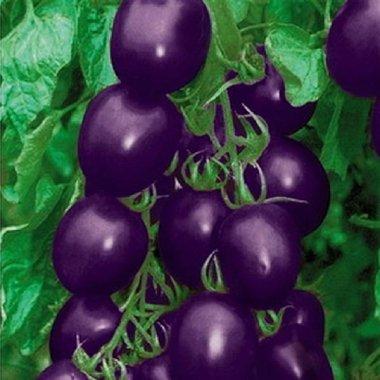 Pakhuis 20 Graines Violet Tomate cerise fruits biologiques légumes usine