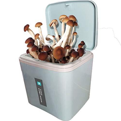 Rowe Cultive su Propio Kit de árboles de Bonsai, Kits de Crecimiento de champiñones de Shiitake, Kit de Cultivo de Hongos de ostras en Interiores para niños y Principiantes (Color : Blue)