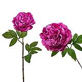 Juego de 2 Ramos de Peonías Artificiales, Flores Artificiales para el Hogar, Flores Artificiales de Seda - Altura 65 cm - Fucsia Oscuro