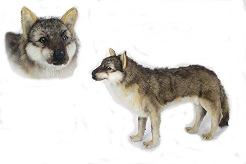 オオカミ60 BH6760