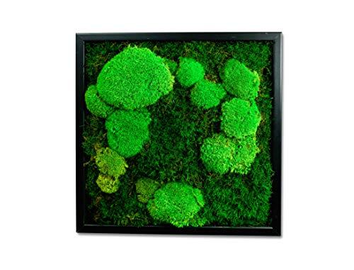 Moosbild Wandbild mit Moos Kugelmoos Moosplatte Pflanzenbilder Moosbilder versch. Maße günstig (35x35 cm, schwarz)