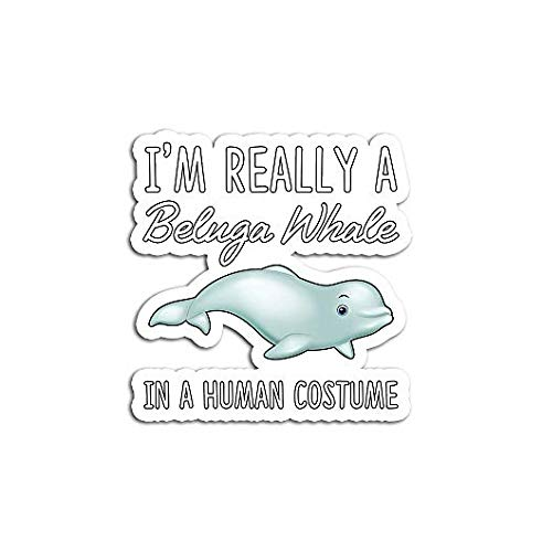 A Beluga Whale in Human Costume Halloween - Sticker Graphic - Auto, Wall, Laptop, Cell, Truck Sticker for Windows, Cars, Trucks