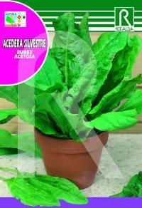 Rocalba Semilla Acedera Silvestre