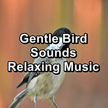 Gentle Bird Sounds Relaxing Music