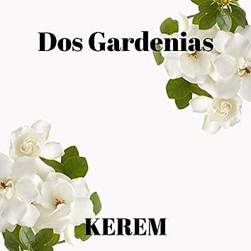 Dos Gardenias (feat. Diego El Cigala)