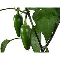 A principios de Jalapeño Pimienta caliente -> 20 semillas por Samenchilishop