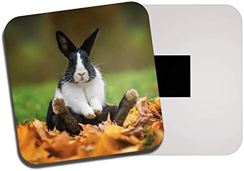 Top 10 Best rabbit fridge magnets Reviews