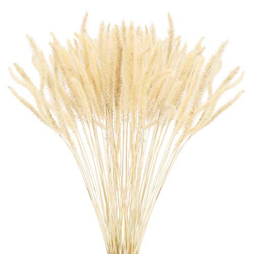 HUAESIN Ramo de Flores Secas Naturales Decoracion Blancas Hierba de Pampas Grass Secas Pequeñas Bouquet Flor Seca para Manualidad Jarrones Navidad Invierno Hogar Oficina Balcon Centro de Mesa