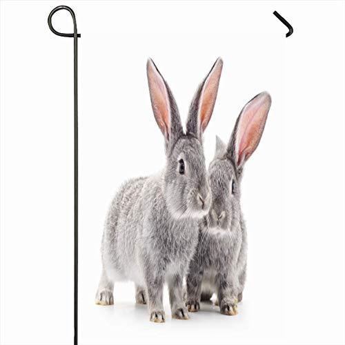 PQU Awesome Home Garden Flags,Zwei Tierische Graue Hasen-Baby-Kaninchen Auf Weißen Paartieren Wildtiere Kleine Fotografie Naturhase Dekorative Gartenflaggen,32x45.7cm