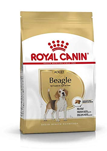 ROYAL CANIN Beagle Adult 12 kg, 1er Pack (1 x 12 kg)