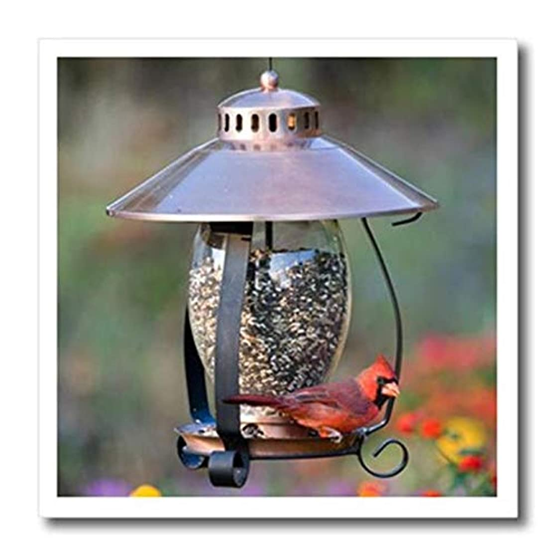 3dRose Northern Cardinal on Copper Lantern Hopper Bird Feeder, Marion Co. IL-Iron On Heat Transfer, 10-inch, for White Material (ht_208643_3)