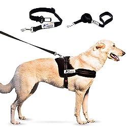 Das beste Hundegeschirr ohne Zug für entspanntes und einfaches Gehen