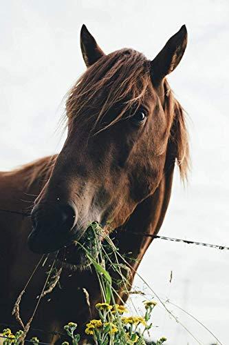 Jkykpp digitaal schilderen van paarden, gras eten 40 x 50 cm (16 x 20 inch)