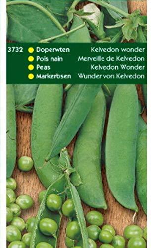 5 stuks Doperwten Kelvedon Wonder 250 gram