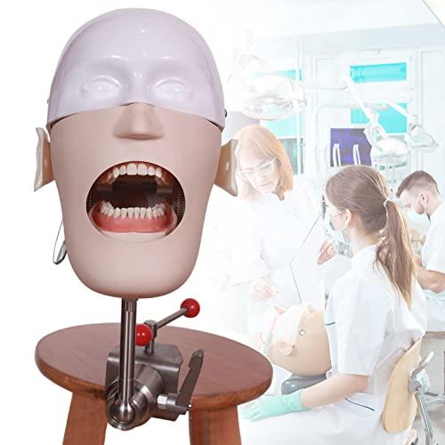 Dental Phantomkopf Modell, Zahnmodell...
