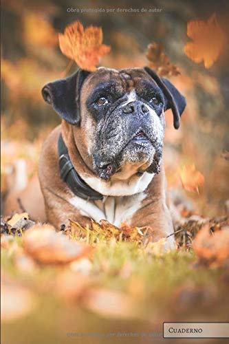 Perros: Boxer: Cuaderno único, planificador, diario, para un regalo (páginas en blanco) ideal para amantes de los  perros, niños, niños, niñas, para ... recetas, bocetos, listas, organización