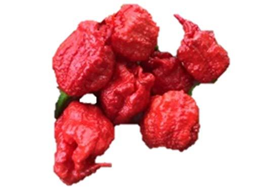 世界一位のスーパー超激辛唐辛子 キャロライナ・リーパー 種 10粒