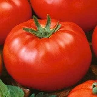 Tomato Seeds Beefsteak Tomato
