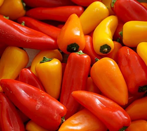 Mini Süßpaprika Mix - Paprika - 10 Samen