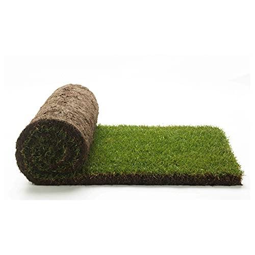 Vero prato pronto a rotoli di 25mq 1^ scelta in erba naturale, NO sintetica sintetico (50 rotoli) per giardino