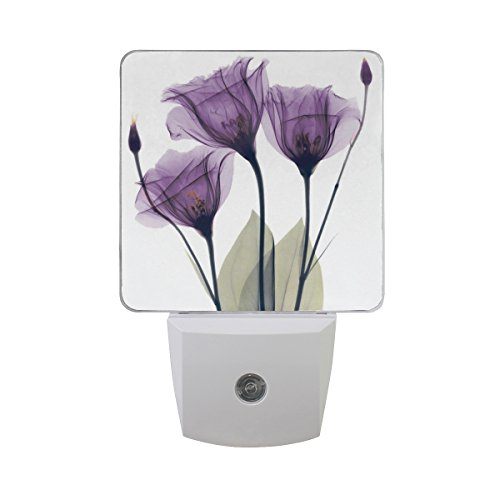 2 Pack Plug-in LED Night Light Lamp with Light Sensor, Lavender Hope Flowers Daylight White for Bedroom, Bathroom, Hallway, Stairways, 0.5W, Purple