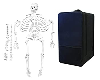 Jackson Global JS00028-CC0 Life Size Dis-Articulated Human Skeleton | 3 Part Skull | One Hand & Foot Loosely Wired | Includes Labeled Diagram & Carrying Case