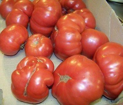tomate, MANITOBA, HEIRLOOM, 60 jours! 38 graines! Groco