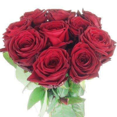 Rote Rosen - Premiumrosen XXL - 10 x großblütige, langstielige Rose