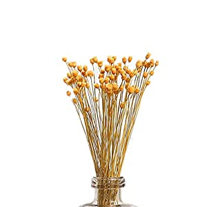 Silk Flower Arrangements 250 Stems Natural Dry Flowers Brazilian Small StarDaisy Decorative Dried Flowers Mini Daisy Chamomile Bouquet for Wedding DIY Home Party