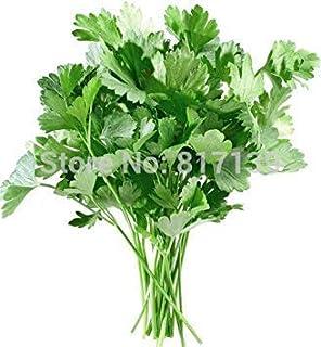 芳香性植物の種Gianthyssop、漢方薬の種Agastache Rugosaの種 - 50粒子